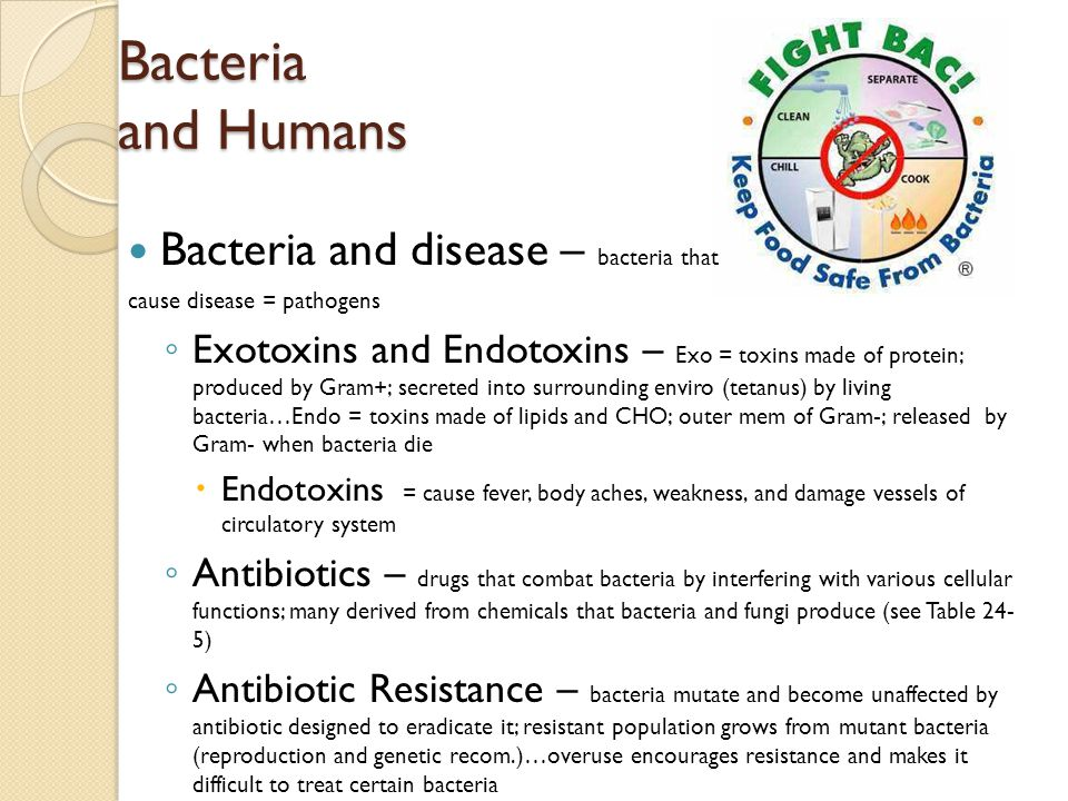 Bacteria and Humans Bacteria and disease – bacteria that cause disease = pathogens ◦ Exotoxins and Endotoxins – Exo = toxins made of protein; produced