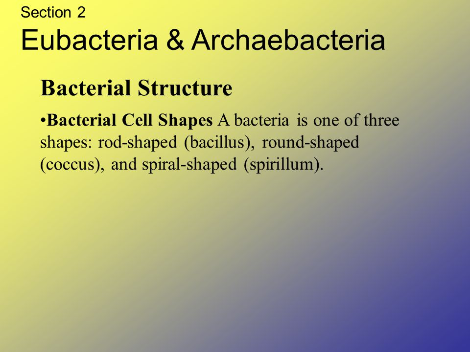 Section 2 Eubacteria & Archaebacteria Bacterial Structure Bacterial Cell Shapes A bacteria is one of three shapes: rod-shaped (bacillus), round-shaped (coccus), and spiral-shaped (spirillum).