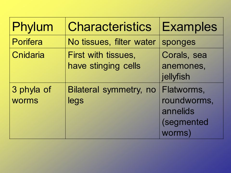 PhylumCharacteristicsExamples PoriferaNo tissues, filter watersponges CnidariaFirst with tissues, have stinging cells Corals, sea anemones, jellyfish 3 phyla of worms Bilateral symmetry, no legs Flatworms, roundworms, annelids (segmented worms)