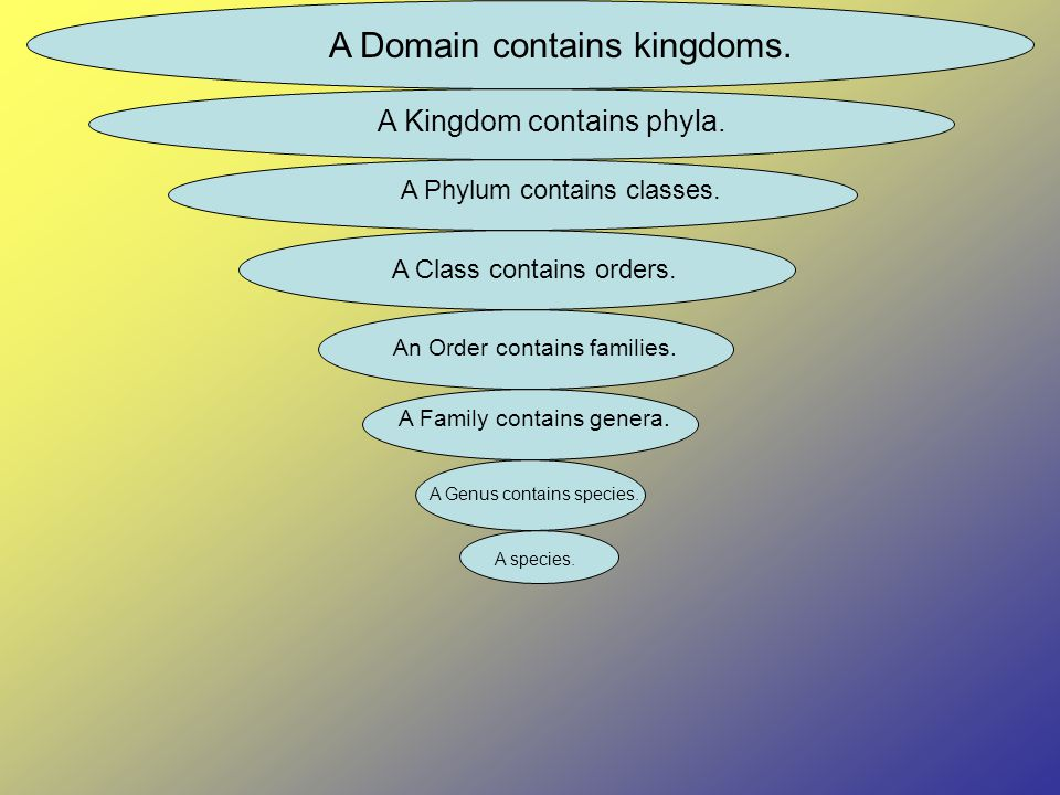A Domain contains kingdoms. A Kingdom contains phyla.