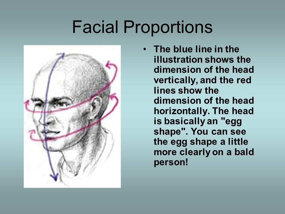 Exercise 1 MAKING AN EGG HEAD: As a prelude to working with an actual head, we ll learn about the relationships between light and dark by using an actual egg.
