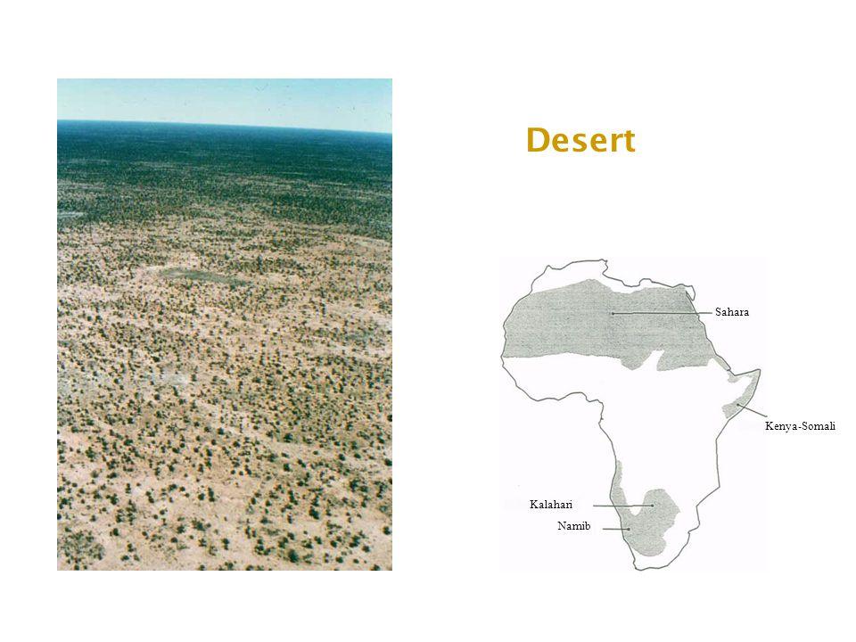 Desert Sahara Kalahari Namib Kenya-Somali