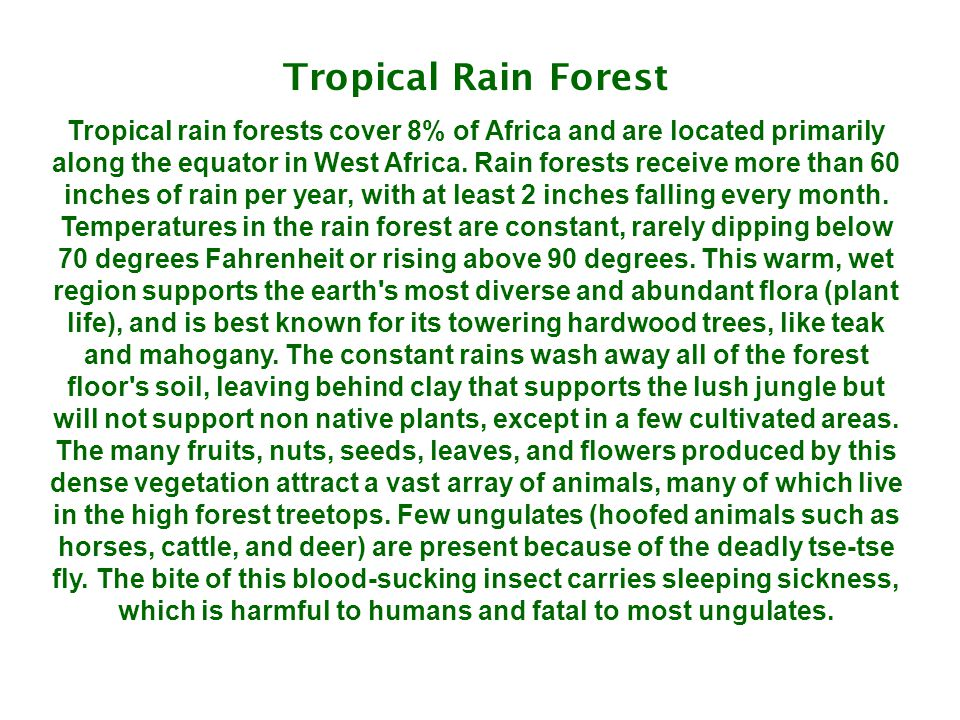 Tropical Rain Forest Tropical rain forests cover 8% of Africa and are located primarily along the equator in West Africa. Rain forests receive more th