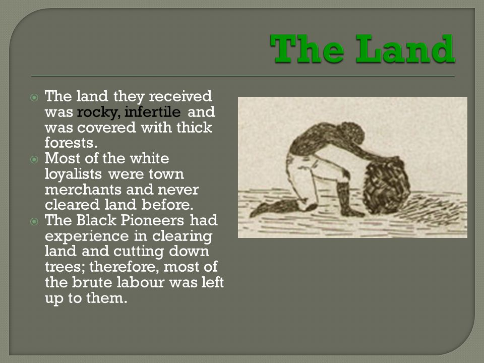  The land they received was rocky, infertile and was covered with thick forests.