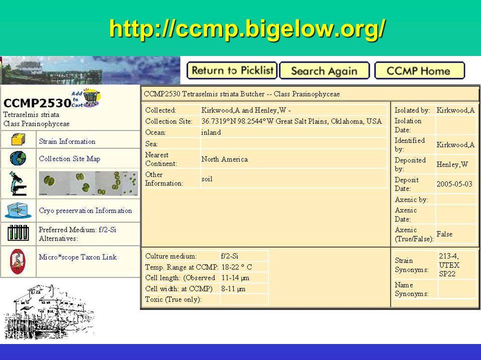 http://ccmp.bigelow.org/