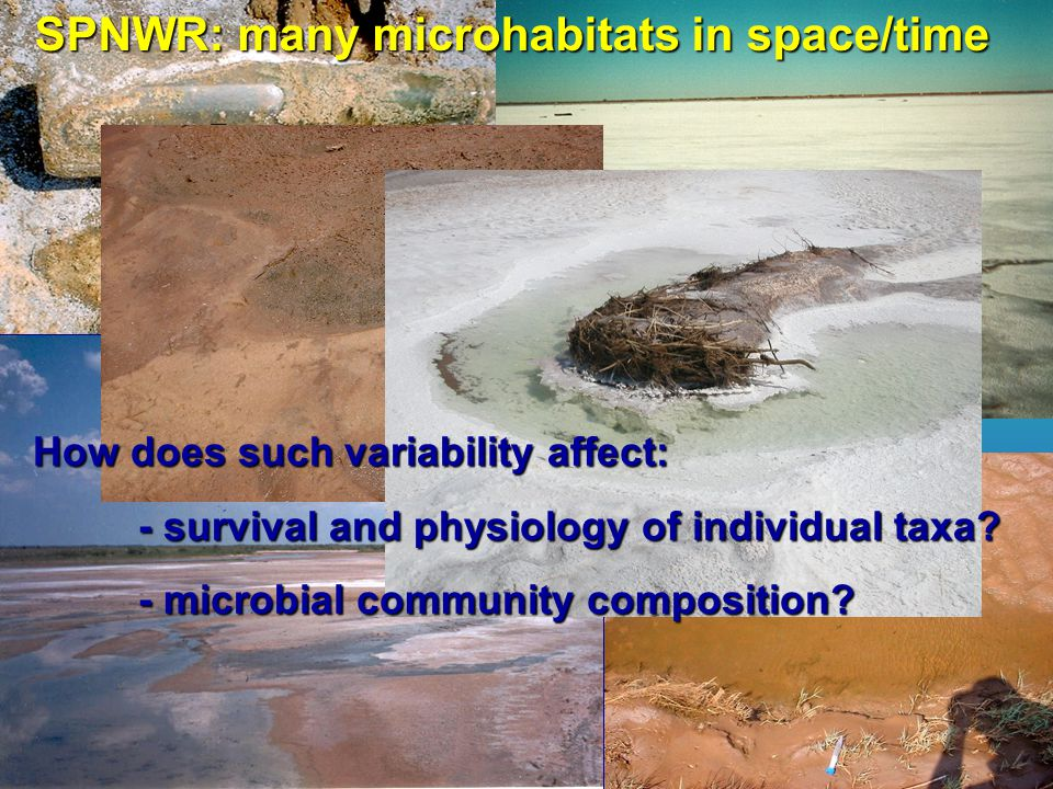 SPNWR: many microhabitats in space/time How does such variability affect: - survival and physiology of individual taxa? - microbial community composit