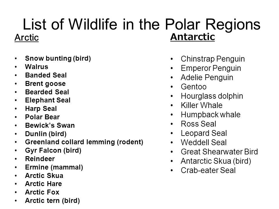 List of Wildlife in the Polar Regions Arctic Snow bunting (bird) Walrus Banded Seal Brent goose Bearded Seal Elephant Seal Harp Seal Polar Bear Bewick
