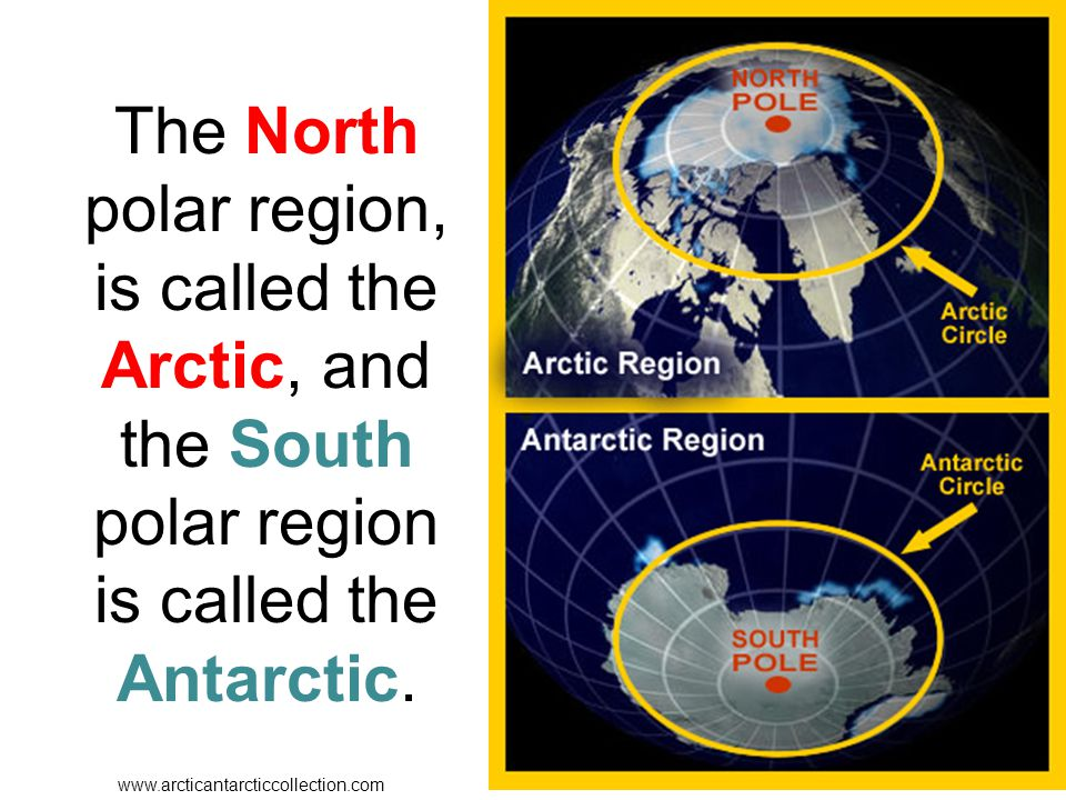 The North polar region, is called the Arctic, and the South polar region is called the Antarctic. www.arcticantarcticcollection.com