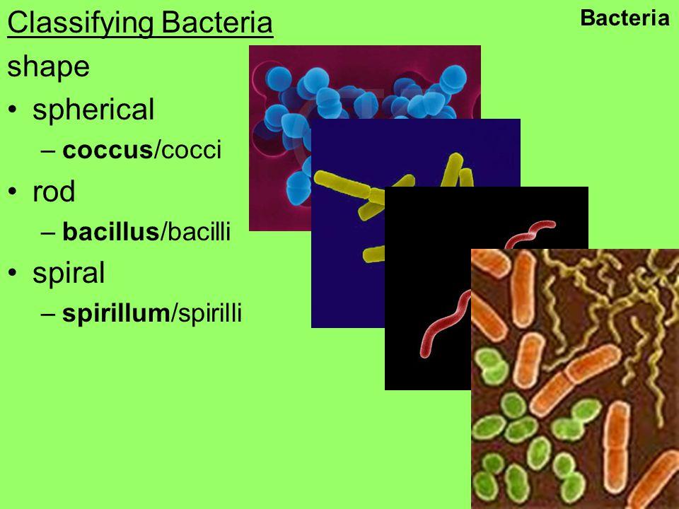 Classifying Bacteria shape spherical –coccus/cocci rod –bacillus/bacilli spiral –spirillum/spirilli Bacteria