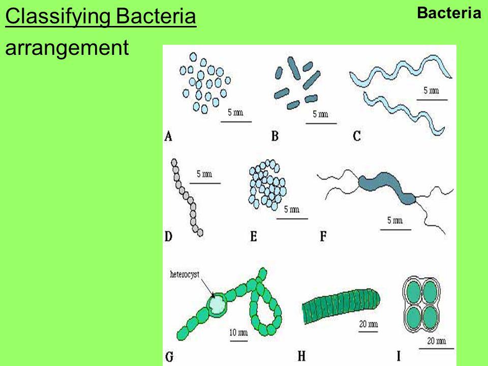 Classifying Bacteria arrangement Bacteria