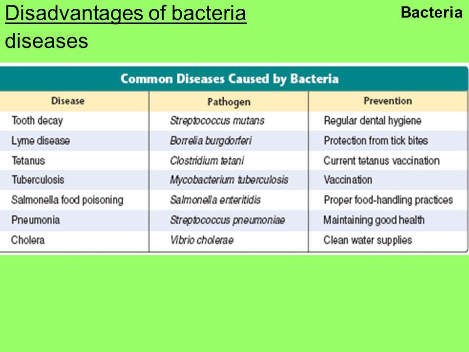 Disadvantages of bacteria diseases Bacteria
