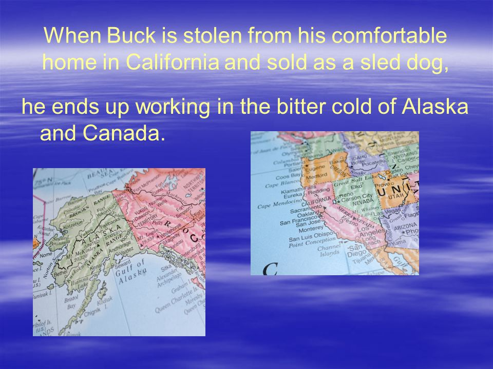 When Buck is stolen from his comfortable home in California and sold as a sled dog, he ends up working in the bitter cold of Alaska and Canada.