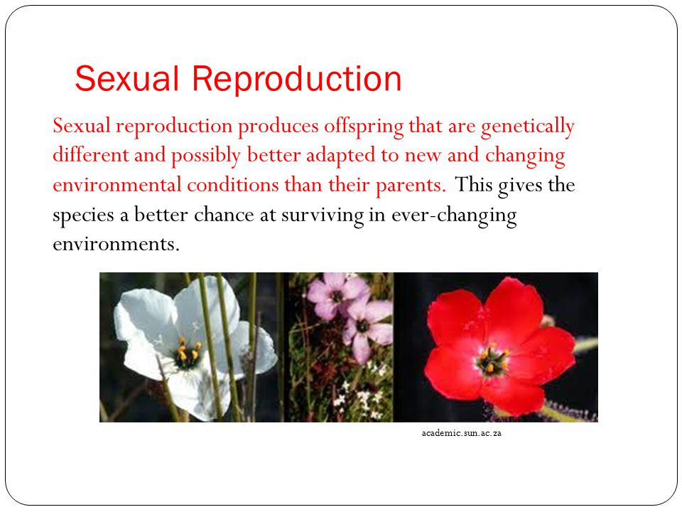Sexual Reproduction Sexual reproduction produces offspring that are genetically different and possibly better adapted to new and changing environmenta