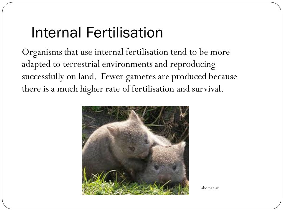Internal Fertilisation Organisms that use internal fertilisation tend to be more adapted to terrestrial environments and reproducing successfully on l