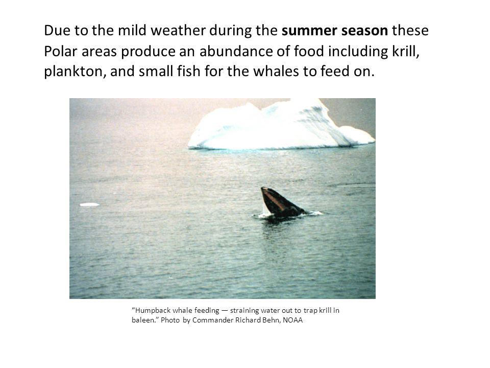 For additional information on the Hawaiian Islands Humpback Whale National Marine Sanctuary, visit: http://hawaiihumpbackwhale.noaa.gov/