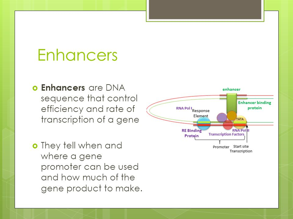 Enhancers  Enhancers are DNA sequence that control efficiency and rate of transcription of a gene  They tell when and where a gene promoter can be used and how much of the gene product to make.