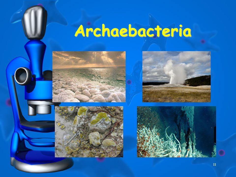 11 Archaebacteria
