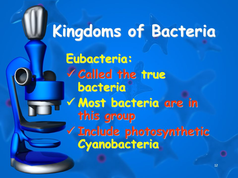 12 Kingdoms of Bacteria Eubacteria: Called the true bacteria Called the true bacteria Most bacteria are in this group Most bacteria are in this group