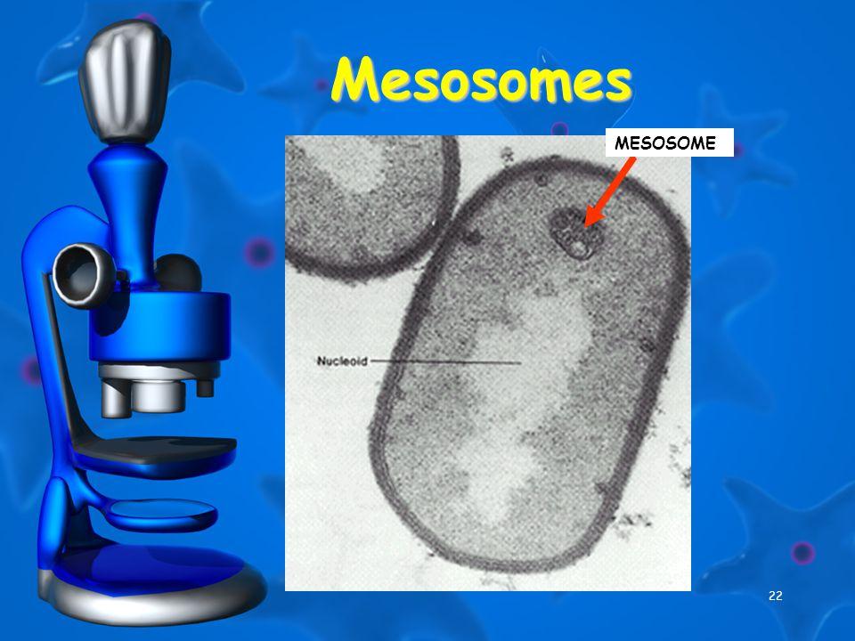 22 Mesosomes MESOSOME