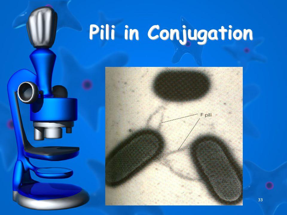 33 Pili in Conjugation