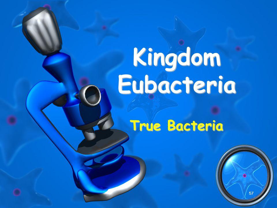 57 Kingdom Eubacteria True Bacteria