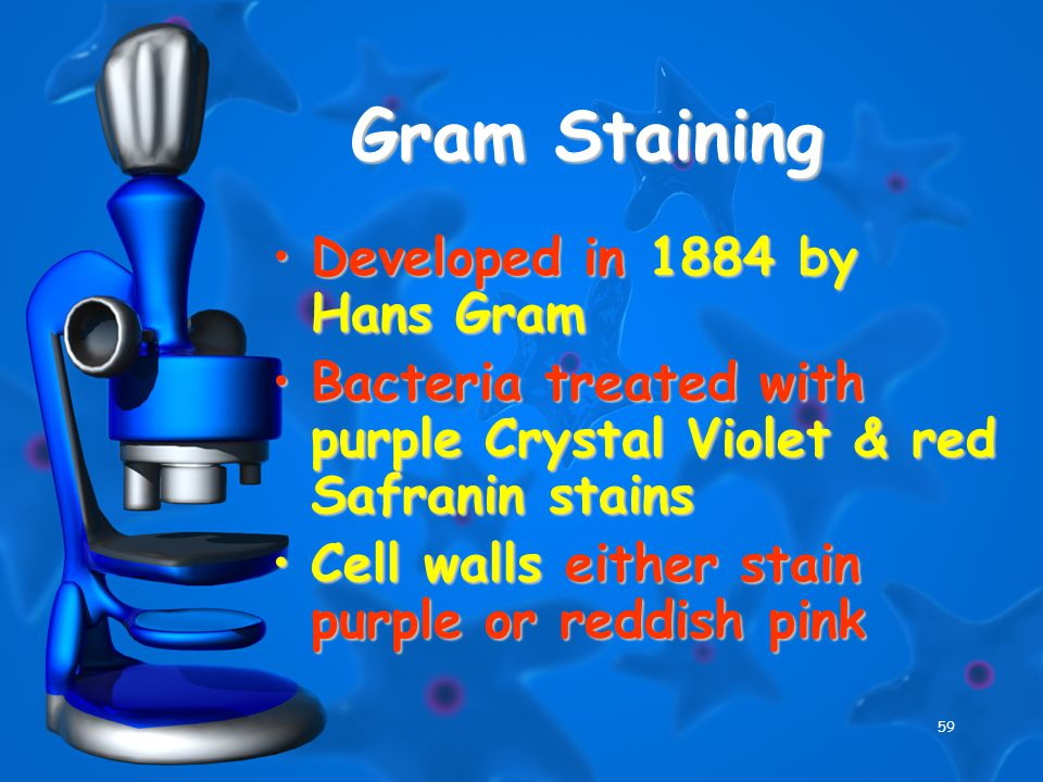 59 Gram Staining Developed in 1884 by Hans GramDeveloped in 1884 by Hans Gram Bacteria treated with purple Crystal Violet & red Safranin stainsBacteri