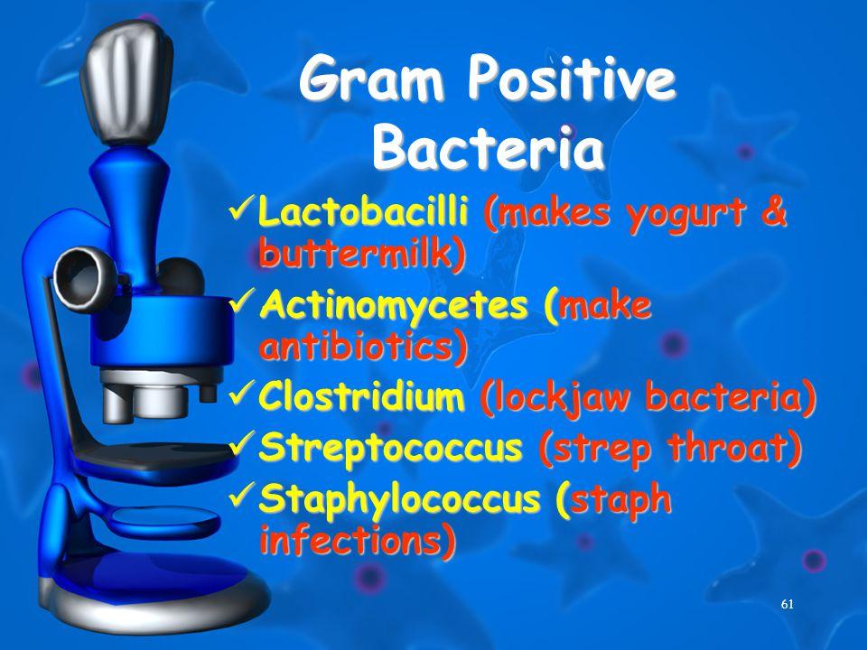 61 Gram Positive Bacteria Lactobacilli (makes yogurt & buttermilk) Lactobacilli (makes yogurt & buttermilk) Actinomycetes (make antibiotics) Actinomycetes (make antibiotics) Clostridium (lockjaw bacteria) Clostridium (lockjaw bacteria) Streptococcus (strep throat) Streptococcus (strep throat) Staphylococcus (staph infections) Staphylococcus (staph infections)