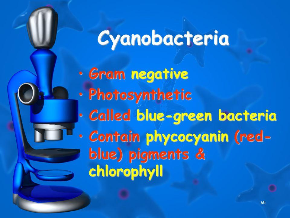 65 Cyanobacteria Gram negativeGram negative PhotosyntheticPhotosynthetic Called blue-green bacteriaCalled blue-green bacteria Contain phycocyanin (red- blue) pigments & chlorophyllContain phycocyanin (red- blue) pigments & chlorophyll