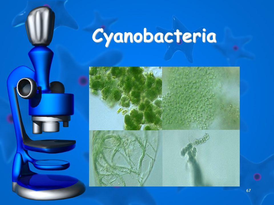 67 Cyanobacteria