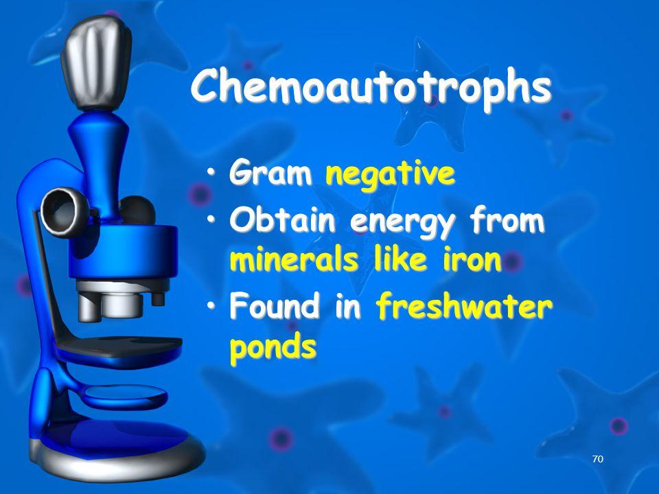 70 Chemoautotrophs Gram negativeGram negative Obtain energy from minerals like ironObtain energy from minerals like iron Found in freshwater pondsFound in freshwater ponds
