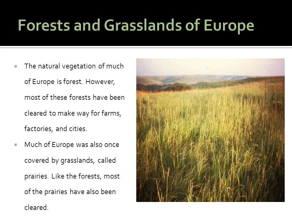  The natural vegetation of much of Europe is forest. However, most of these forests have been cleared to make way for farms, factories, and cities. 