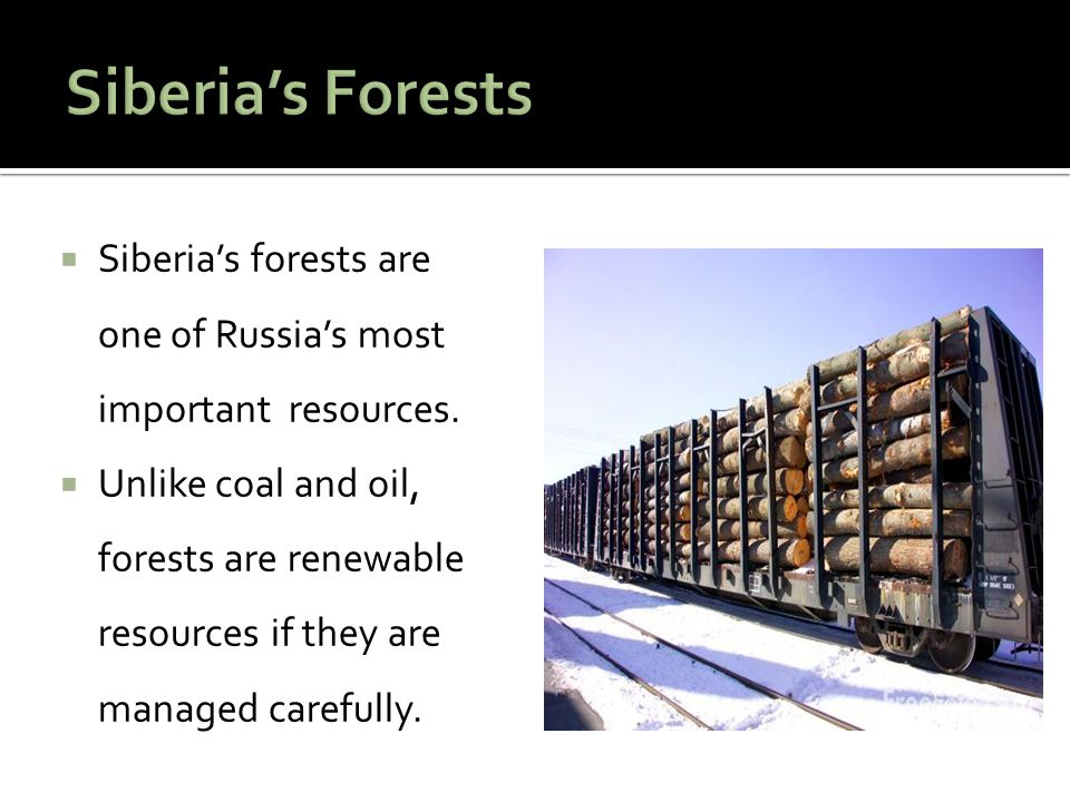  Siberia's forests are one of Russia's most important resources.  Unlike coal and oil, forests are renewable resources if they are managed carefully