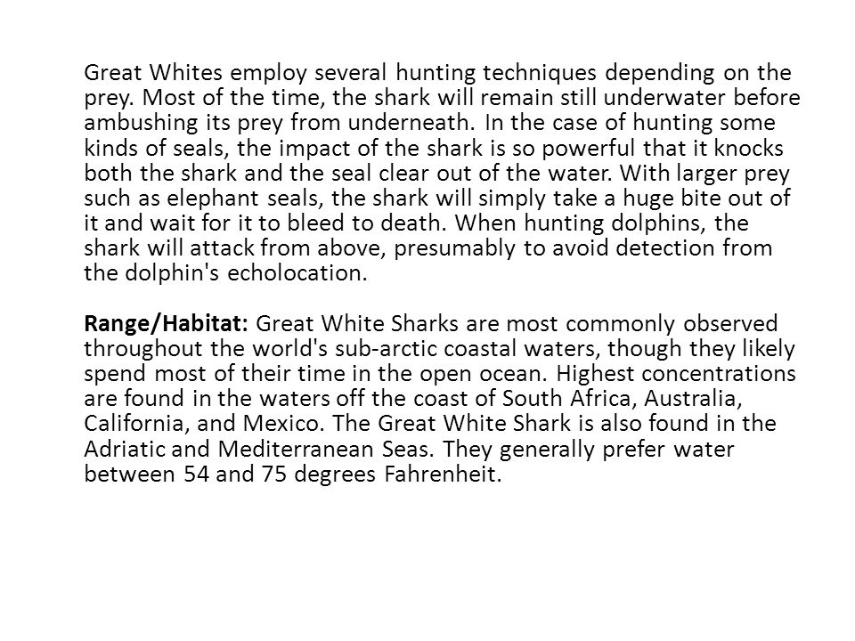 Great Whites employ several hunting techniques depending on the prey. Most of the time, the shark will remain still underwater before ambushing its pr