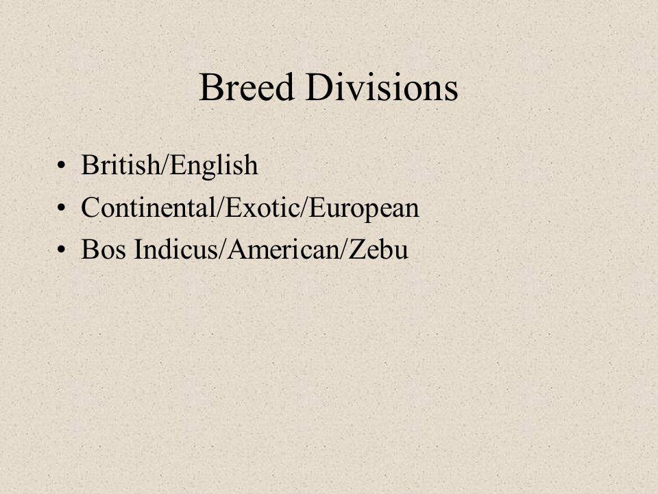 Breed Divisions British/English Continental/Exotic/European Bos Indicus/American/Zebu
