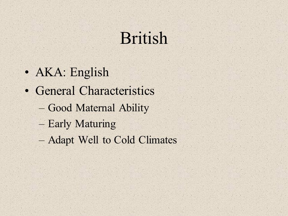 British AKA: English General Characteristics –Good Maternal Ability –Early Maturing –Adapt Well to Cold Climates