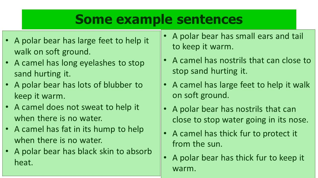 Some example sentences A polar bear has large feet to help it walk on soft ground.