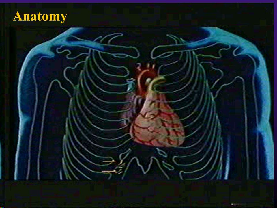 2 Anatomy