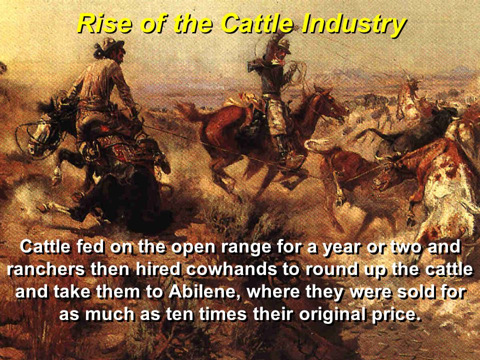 Rise of the Cattle Industry Cattle fed on the open range for a year or two and ranchers then hired cowhands to round up the cattle and take them to Abilene, where they were sold for as much as ten times their original price.