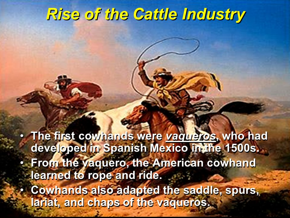 Rise of the Cattle Industry The first cowhands were vaqueros, who had developed in Spanish Mexico in the 1500s.The first cowhands were vaqueros, who had developed in Spanish Mexico in the 1500s.
