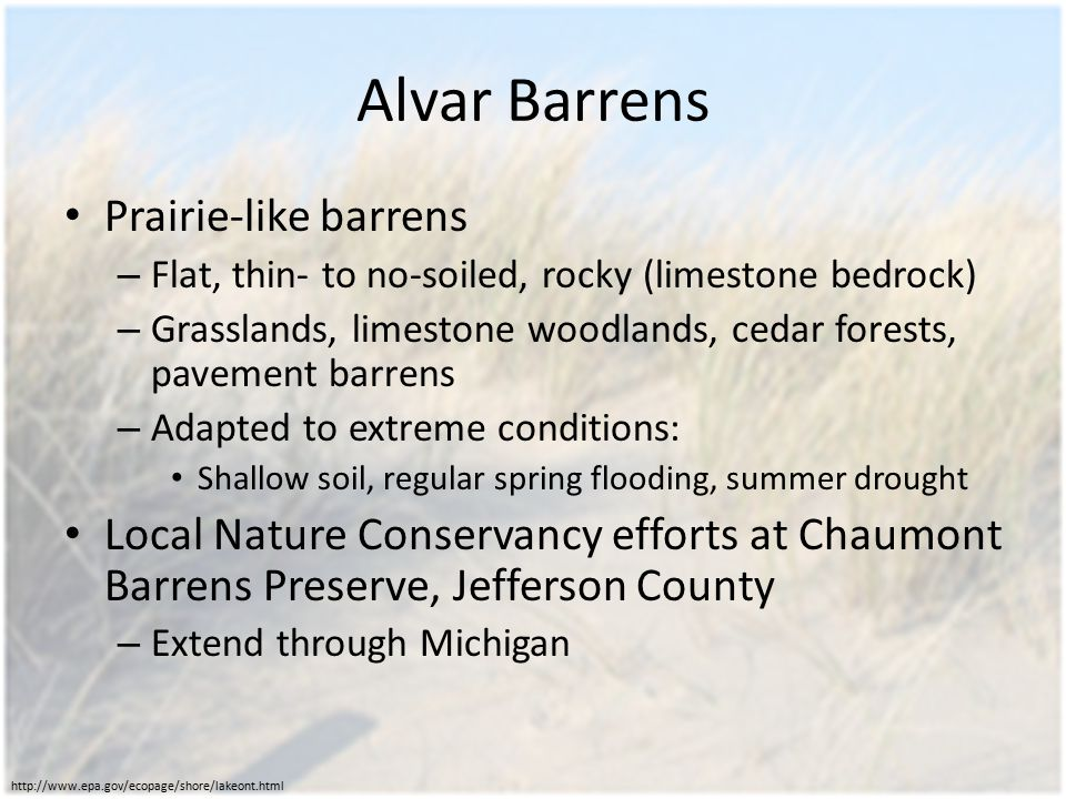 Alvar Barrens Prairie-like barrens – Flat, thin- to no-soiled, rocky (limestone bedrock) – Grasslands, limestone woodlands, cedar forests, pavement barrens – Adapted to extreme conditions: Shallow soil, regular spring flooding, summer drought Local Nature Conservancy efforts at Chaumont Barrens Preserve, Jefferson County – Extend through Michigan http://www.epa.gov/ecopage/shore/lakeont.html