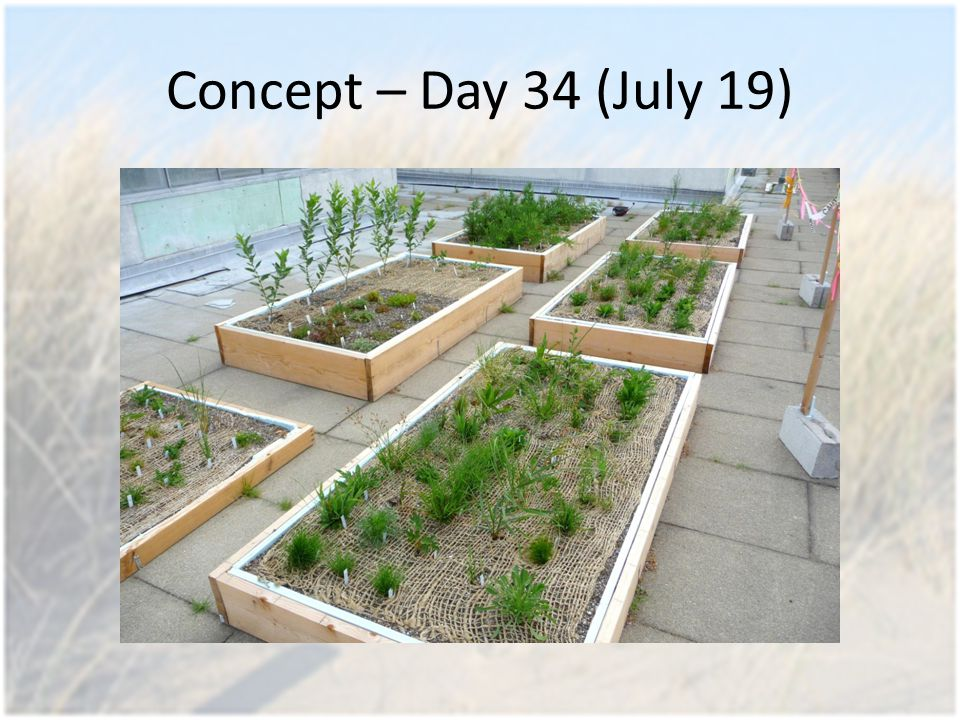 Concept – Day 34 (July 19)