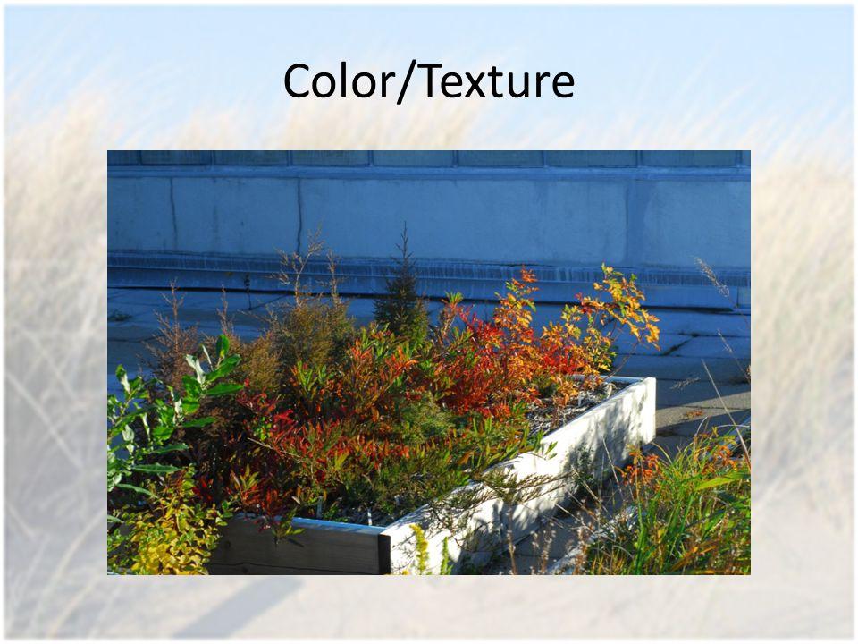 Color/Texture