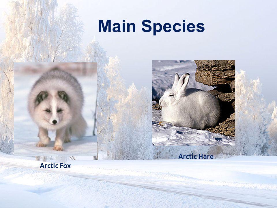 www.soran.edu.iq Main Species Arctic Hare Arctic Fox