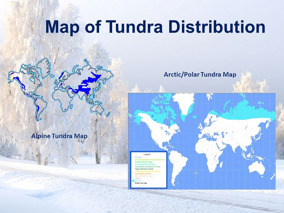 www.soran.edu.iq Map of Tundra Distribution Alpine Tundra Map Arctic/Polar Tundra Map