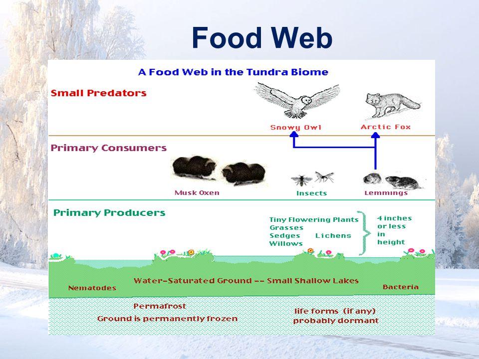 www.soran.edu.iq Food Web
