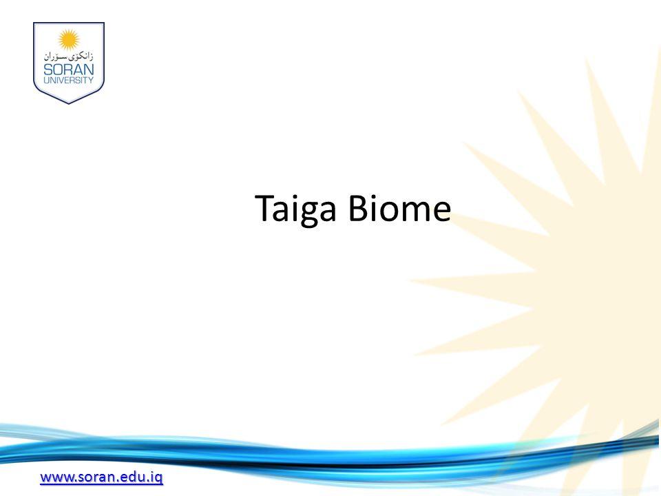 www.soran.edu.iq Taiga Biome