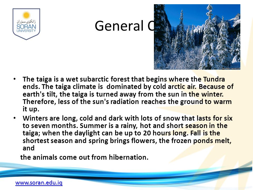 www.soran.edu.iq General Climate The taiga is a wet subarctic forest that begins where the Tundra ends.