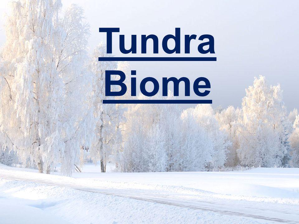 www.soran.edu.iq Tundra Biome