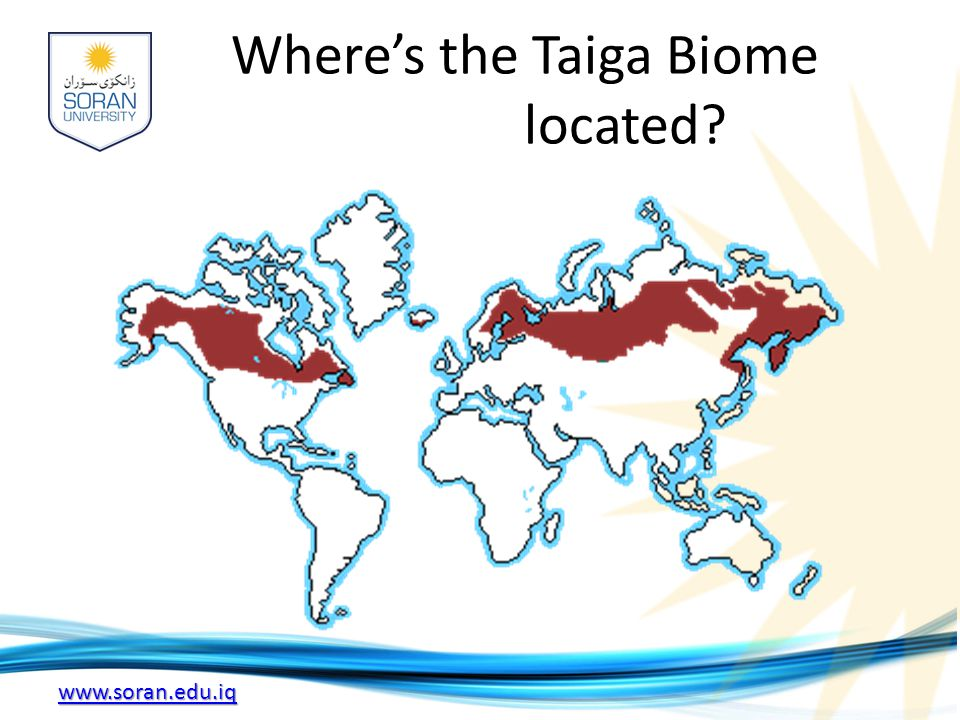 www.soran.edu.iq Where's the Taiga Biome located?