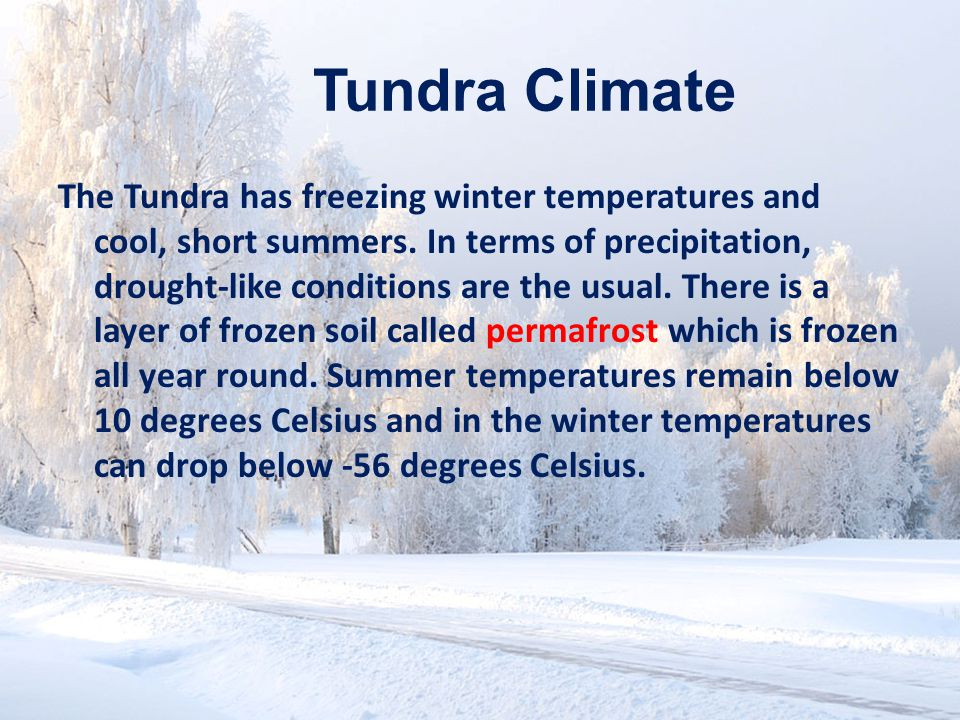 www.soran.edu.iq Tundra Climate The Tundra has freezing winter temperatures and cool, short summers.